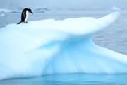 antarktis_eselspinguin_auf_eisberg_1678.jpg